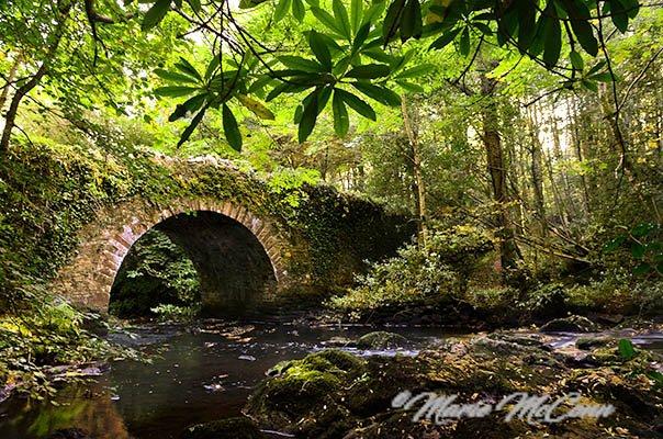 Deerpark_forest_stone_bridge